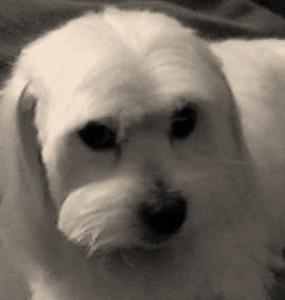 Max - Pet Dog